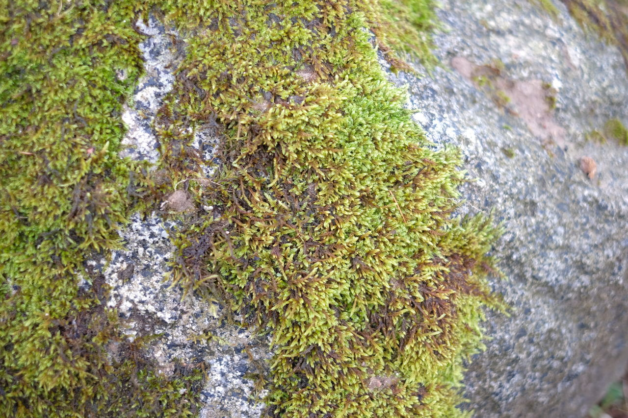 Beauty In Nature Close-up Day Grass Green Color Growth High Angle View Nature No People Outdoors Water