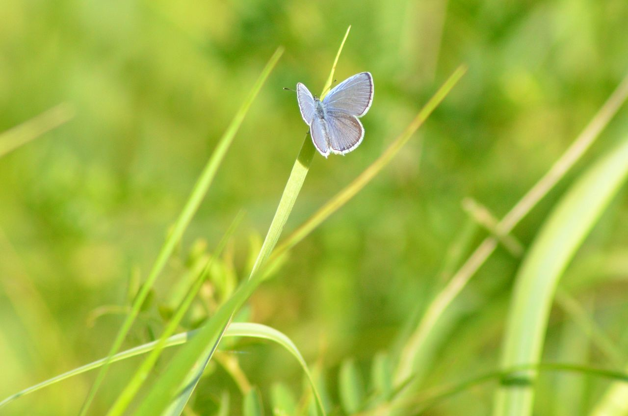 nature, grass, growth, plant, beauty in nature, focus on foreground, day, close-up, outdoors, fragility, insect, one animal, no people, green color, leaf, animal themes, freshness