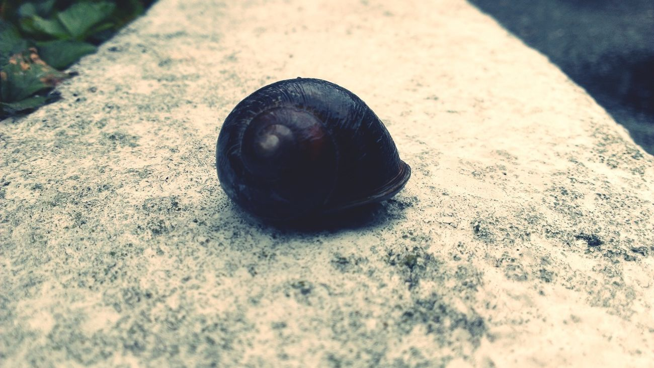 Its gary! Nature Snail TheMinimals (less Edit Juxt Photography) Creatures