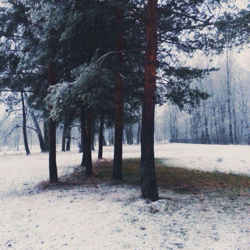 Vscocam VSCO Vscorussia Russia pushkin vscoexpo winter snow forest latergram