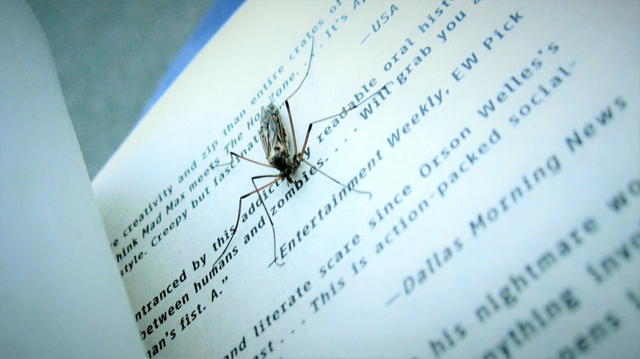 text, insect, close-up, no people, paper, indoors, day