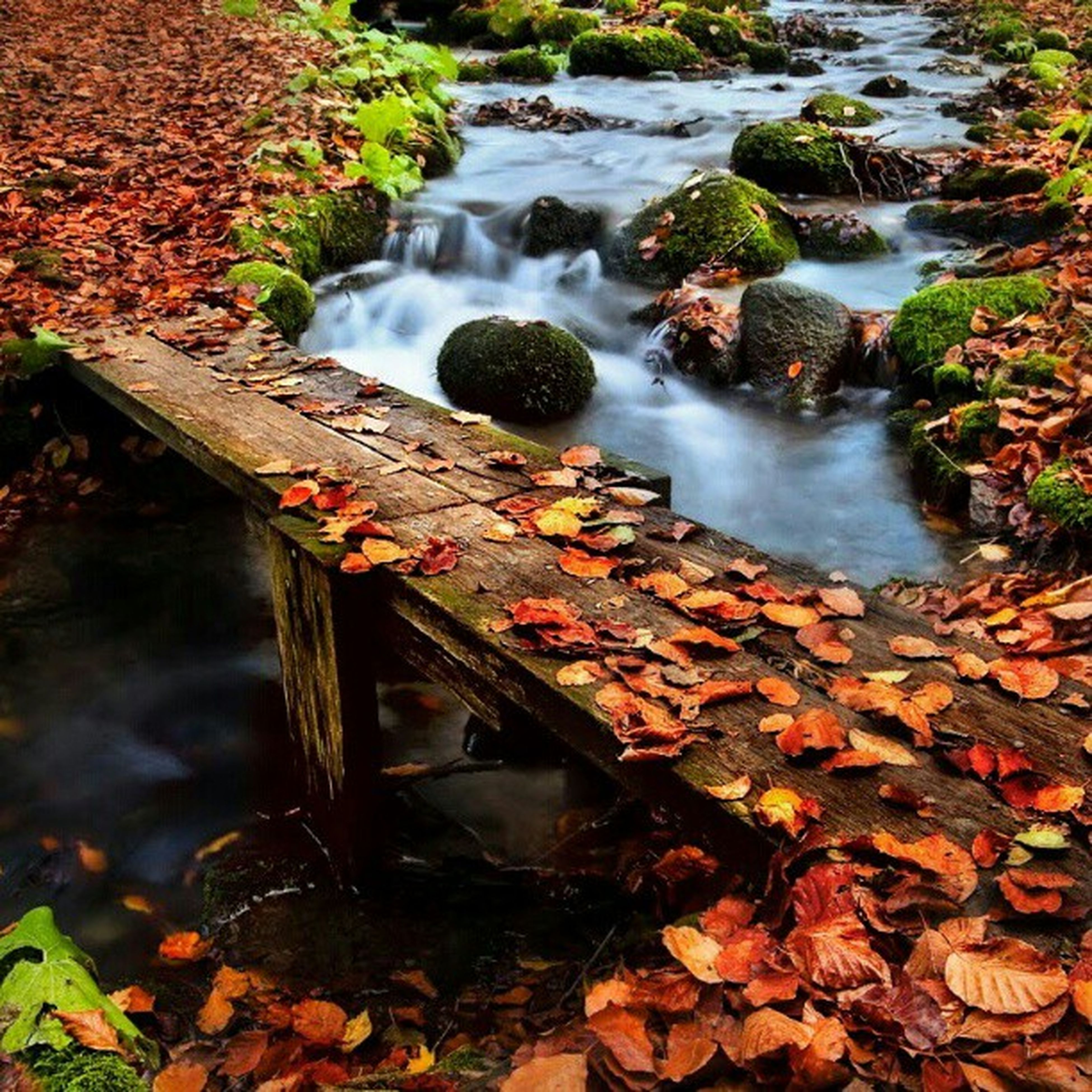 water, rock - object, flowing water, waterfall, flowing, motion, stream, forest, high angle view, nature, moss, long exposure, plant, day, outdoors, steps, stone - object, rock, built structure, no people