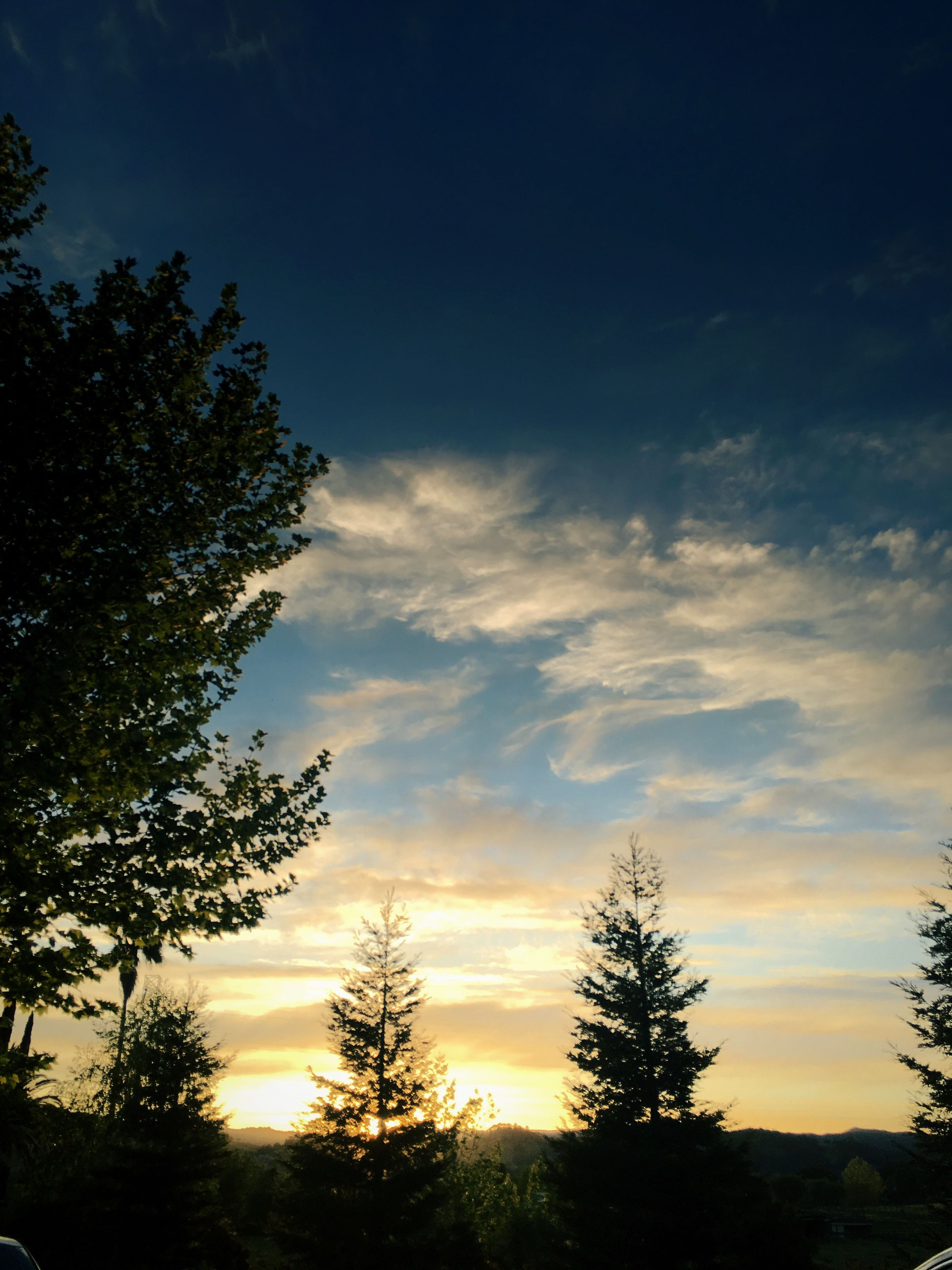 tree, silhouette, sunset, tranquil scene, tranquility, growth, scenics, sky, beauty in nature, nature, cloud, sun, cloud - sky, branch, outdoors, outline, no people, solitude, cloudy, high section, remote, non-urban scene, atmospheric mood
