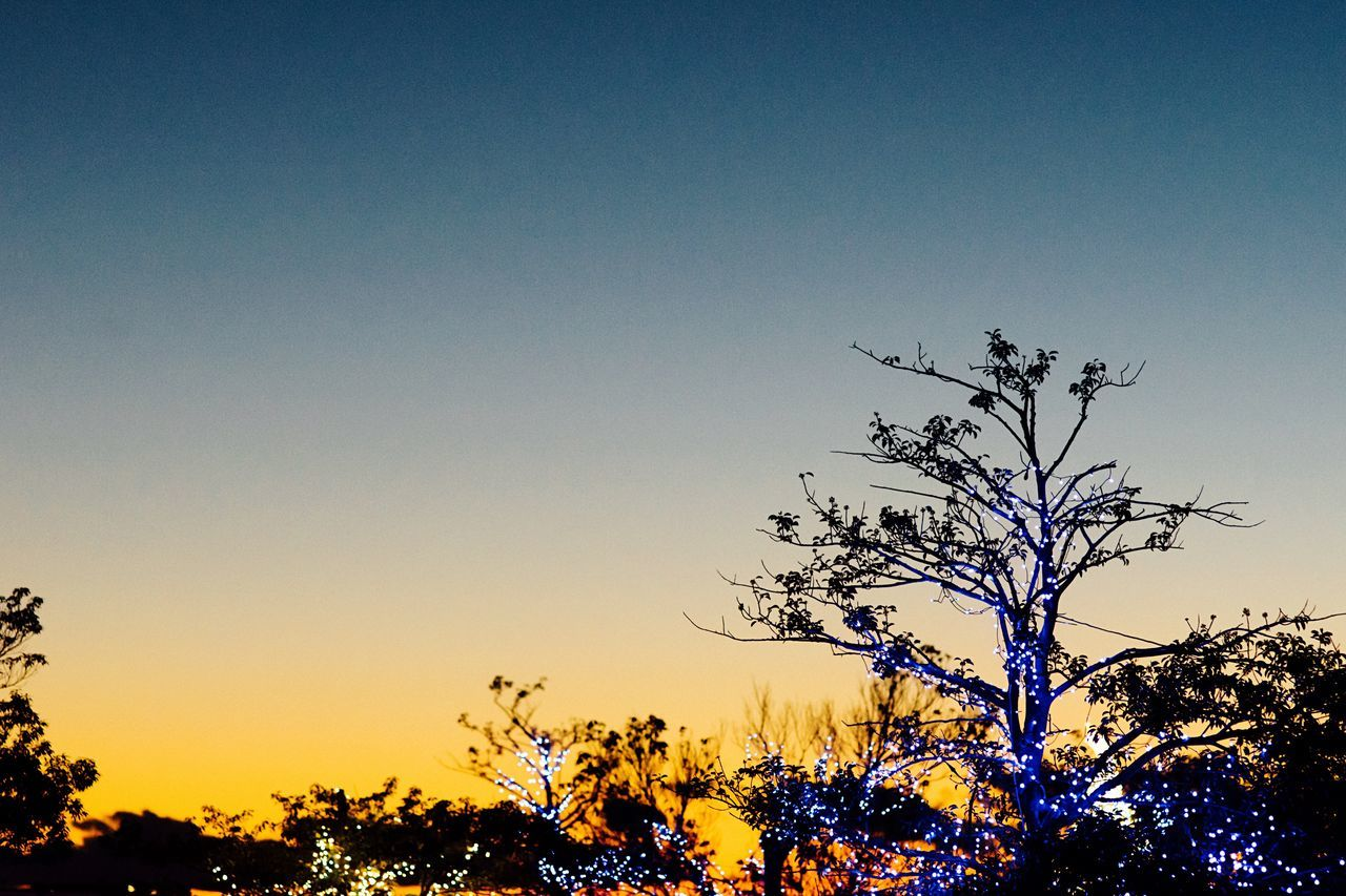 The End Of Winter Tree Sunset Sunset Sky Evening Sky Clear Sky Tree Silhouette Silhouette Silhouettes Atomosphere Beauty In Nature Illmination From My Point Of View No People Treetop Branches Yokohama Japan Yokohama, Japan February February 2017