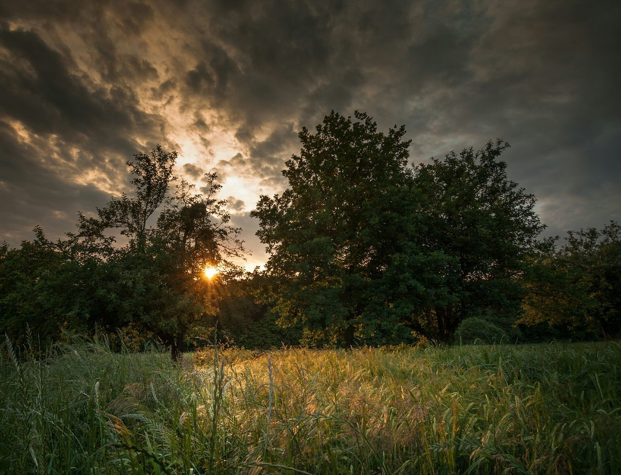 Trees On Grassy Field During Sunset