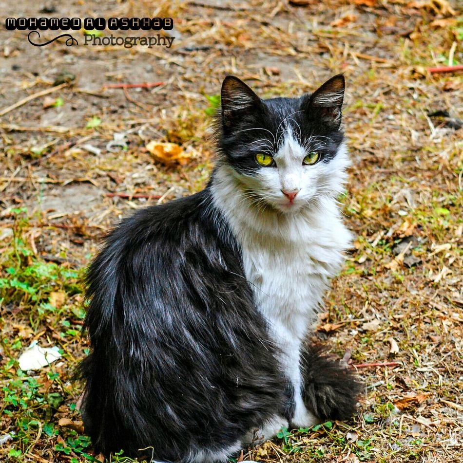 Evryday Egypt Everyday Life Egypt Almoez Street Cats 🐱 Photostreet Animal In Cairo Cat♡ Street Photography