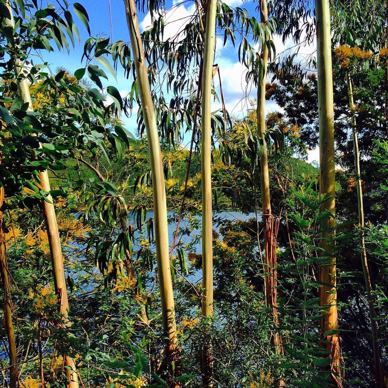Ferreira Do Zezere River Castanheira Trees Nature Landscape Eucalyptus Wild Fluvial Forest