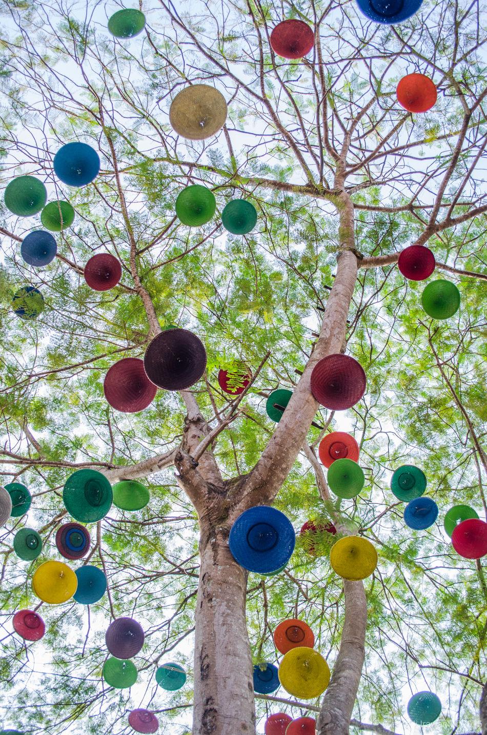 Colorfull fruity hat, Lembangtahususu Oct2015 D5100 The OO Mission