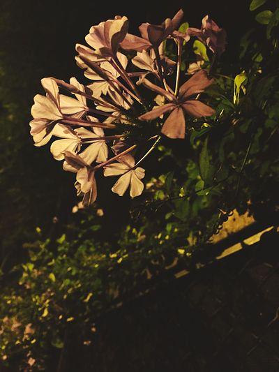 Naturaleza Urbana Textured  Flower Petal Night