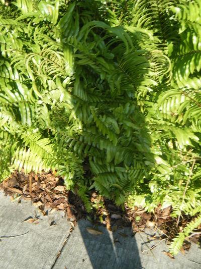 Ferns Girl Green Greenery Leaves Shadow Sidewalk