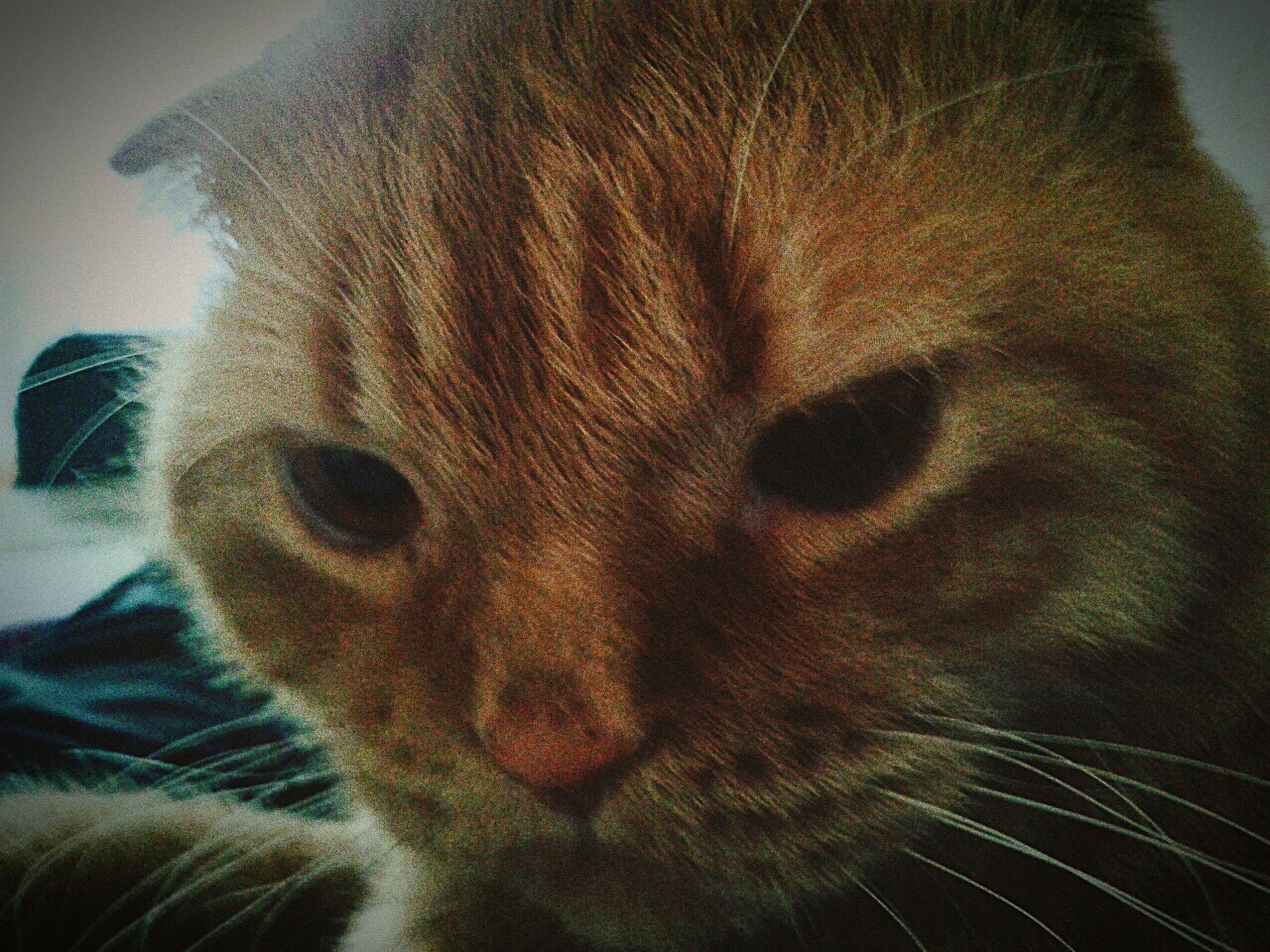 RePicture Friendship кот по имени Гарфилт First Eyeem Photo