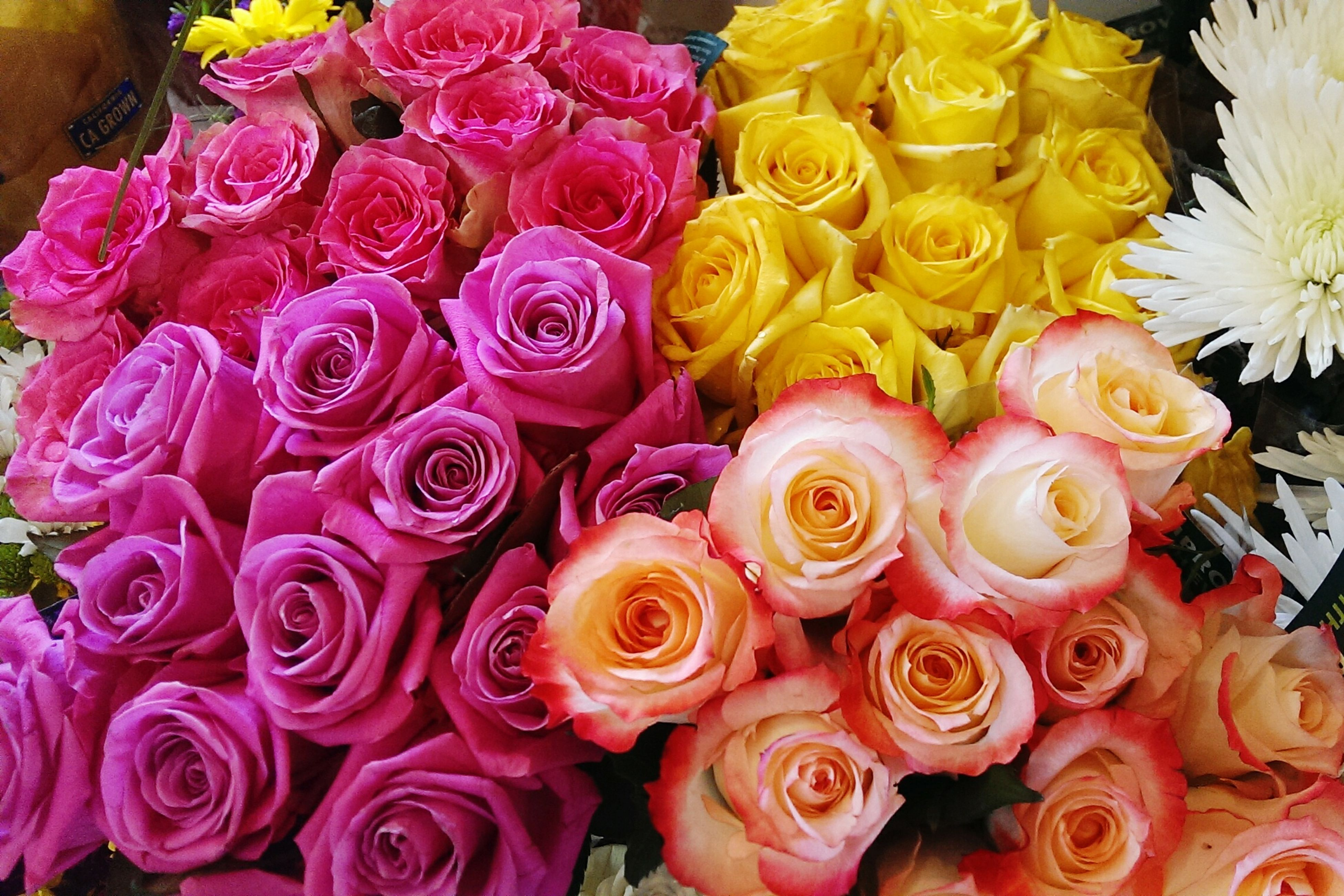 flower, freshness, petal, flower head, fragility, beauty in nature, full frame, bouquet, rose - flower, backgrounds, high angle view, bunch of flowers, abundance, nature, growth, blooming, close-up, indoors, multi colored, yellow