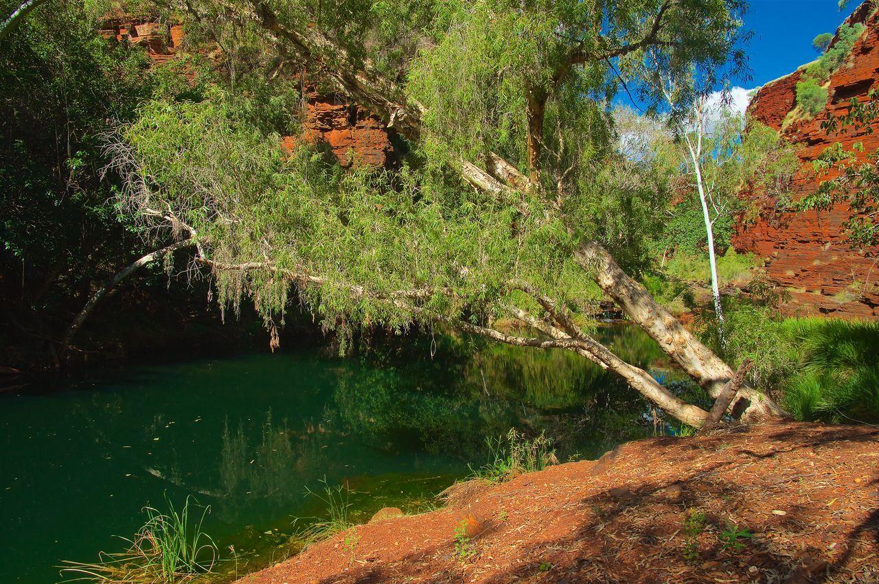 A peaceful place Australia Beauty In Nature Day Karijini Karijini National Park Nature No People Outdoors Pilbara River Tranquil Scene Tranquility Tree Water