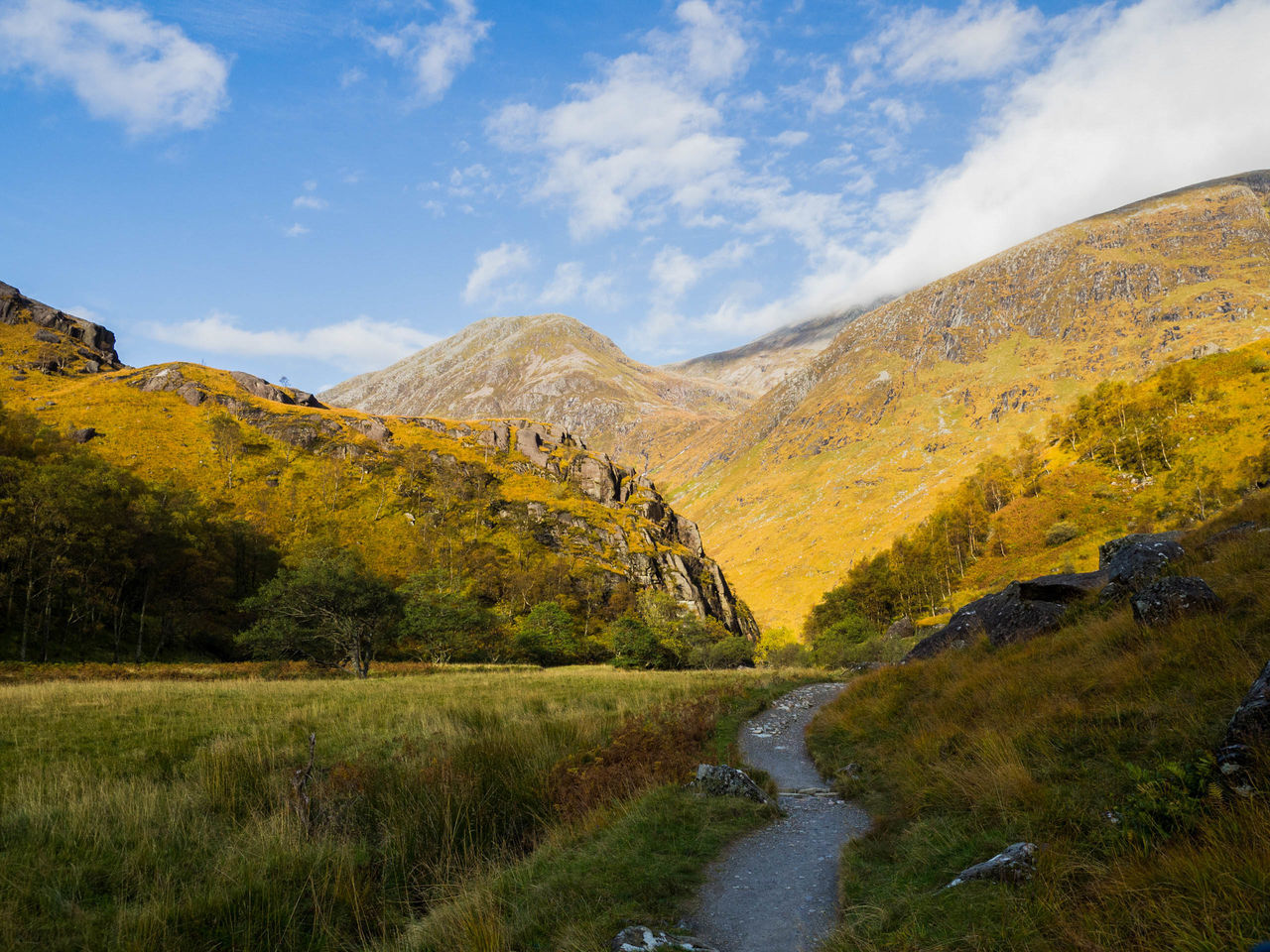 Beautiful stock photos of scotland,  Beauty In Nature,  Day,  Grass,  Growth