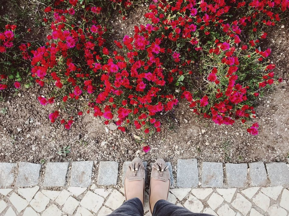 110/365 Human Leg Red Low Section Flower Standing Human Body Part Shoe One Person Outdoors Day Plant Growth Real People Nature One Woman Only Freshness Adult Adults Only People