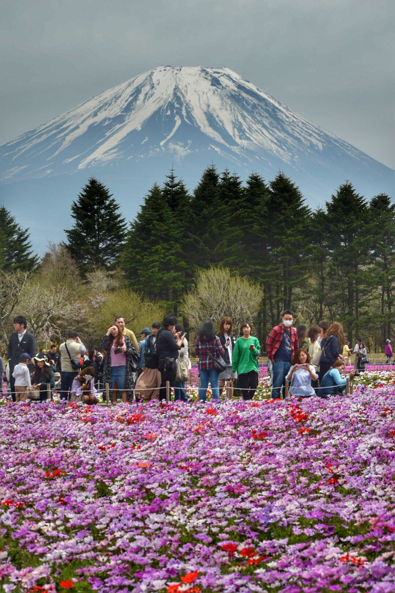 Large Group Of People Mountain Women Nature Men Real People Flower Leisure Activity Lifestyles Day Growth Beauty In Nature Crowd Sky Tree Outdoors Plant Mountain Range Vacations Togetherness Beauty In Nature Mtfuji Nikond5300
