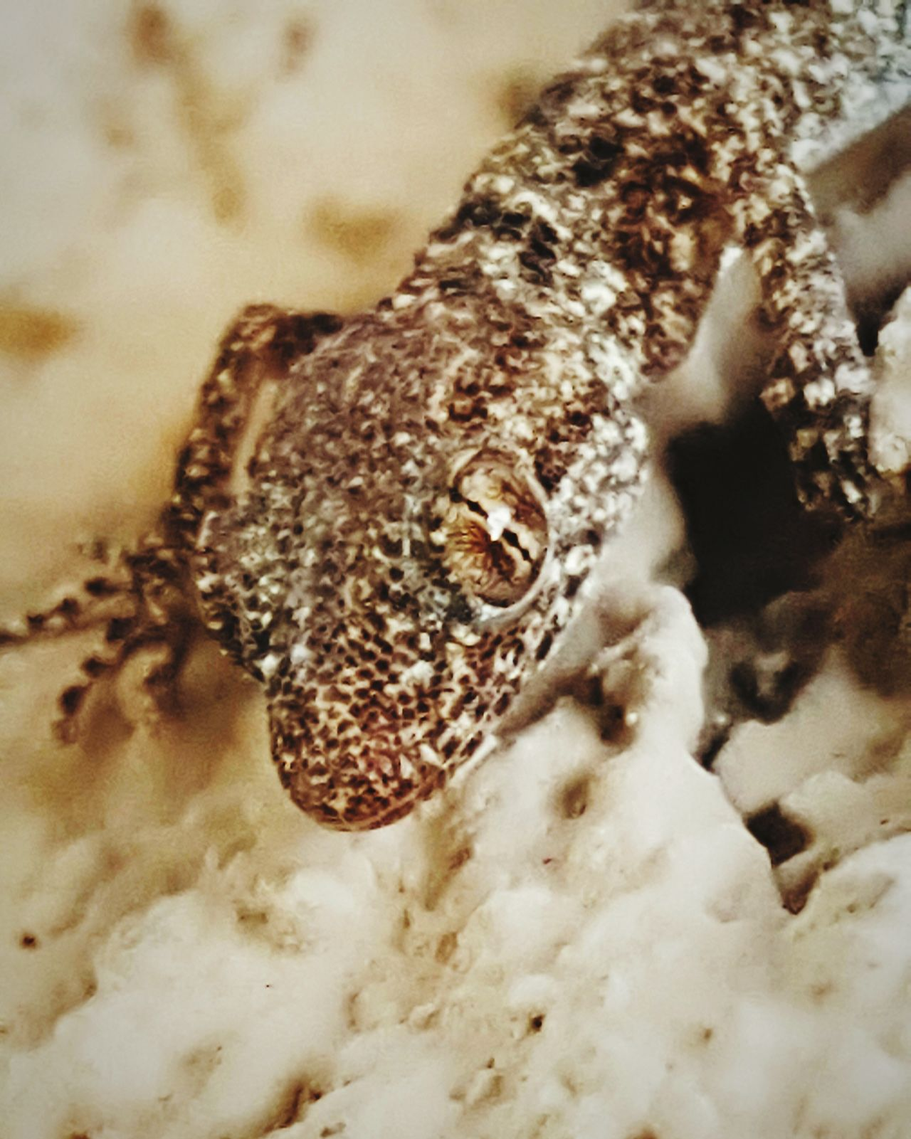 Close-up No People Animal Themes Day Lizard Nature Lizard Close Up Lizard Love Lizard❤ Lizzard Lizard Outdoors Animals In The Wild Nature Eyes