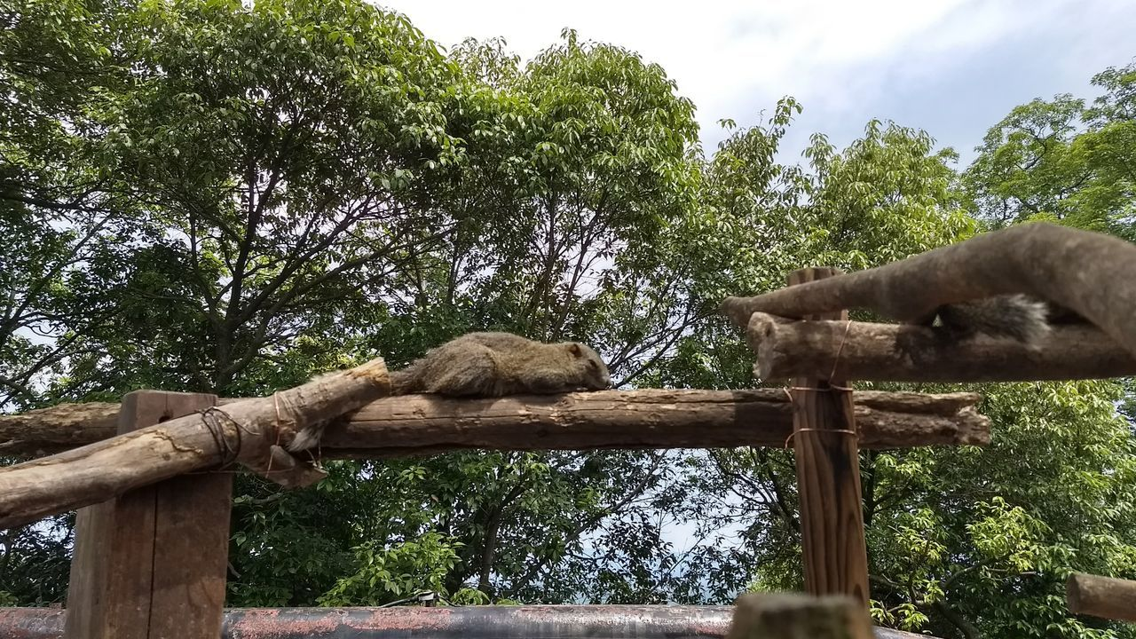 tree, animal themes, mammal, one animal, wood - material, branch, animals in the wild, day, low angle view, outdoors, no people, relaxation, nature, sky