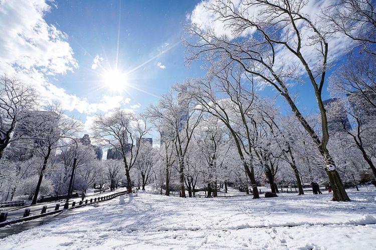 Central Park New York New York City Manhattan Snow ❄ Winter First Eyeem Photo Eyemphotography