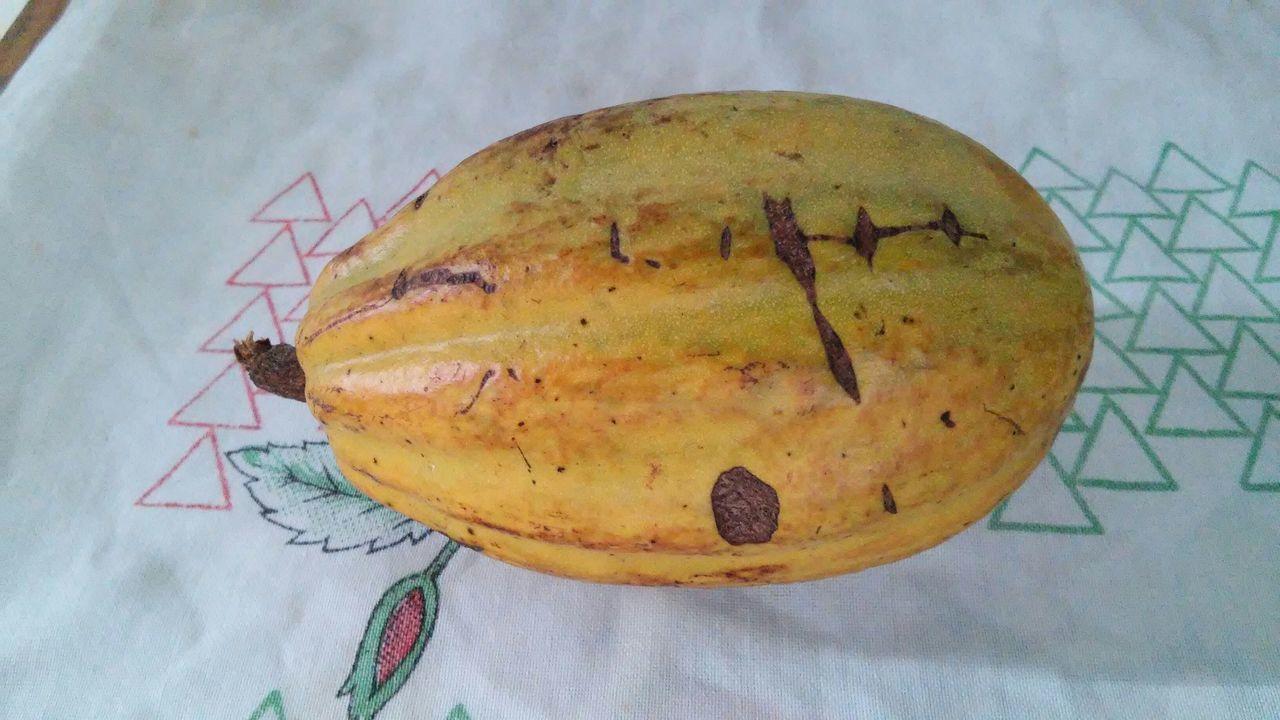 Fruits Cacau