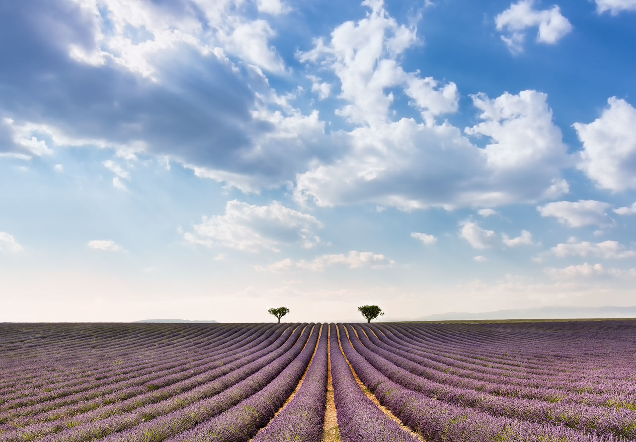 Lavender field in Provence Agriculture Beauty In Nature Cloud - Sky Composition Day Field Freshness Growth Landscape Lavender Lavender Field Nature No People Outdoors Perfume Plant Pro Purple Rural Scene Scenics Simmetry Sky South Of France Tranquil Scene Tranquility Sommergefühle