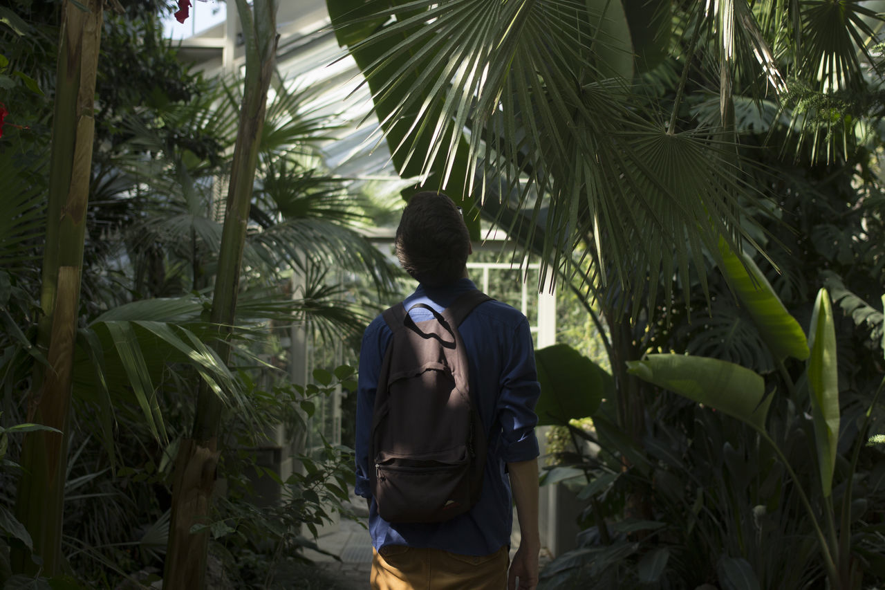 Bamboo Grove Botanical Botanical Gardens Day Explore Exploring Green Greenhouse Growth Leaf Men Nature One Person Palm Tree Peace Peaceful People Portrait Real People Rear View Relaxing Serenity Sun Sunlight Tree