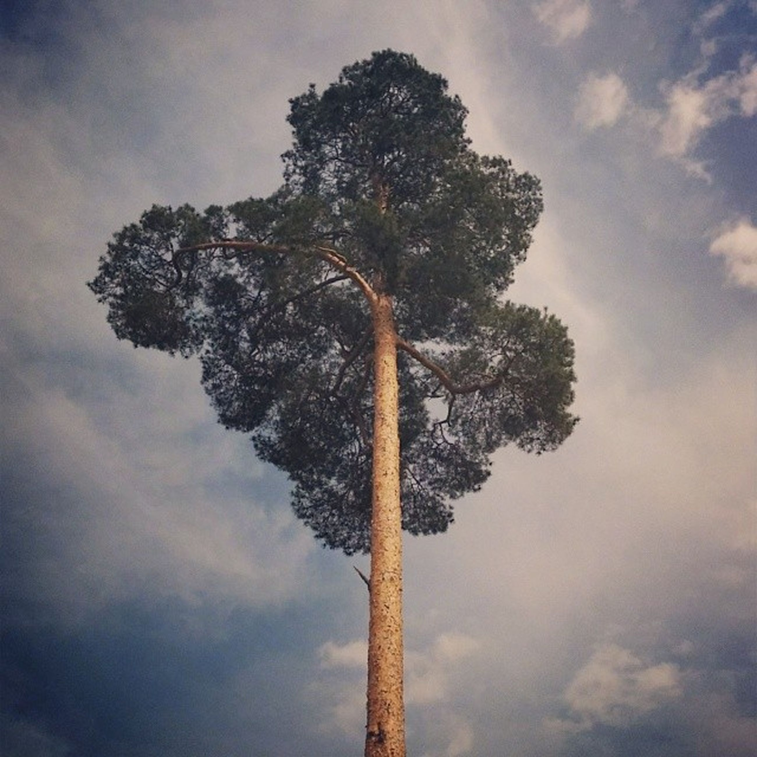 tree, sky, low angle view, cloud - sky, tranquility, tree trunk, cloudy, nature, cloud, silhouette, tranquil scene, growth, beauty in nature, scenics, branch, palm tree, outdoors, no people, bare tree, day