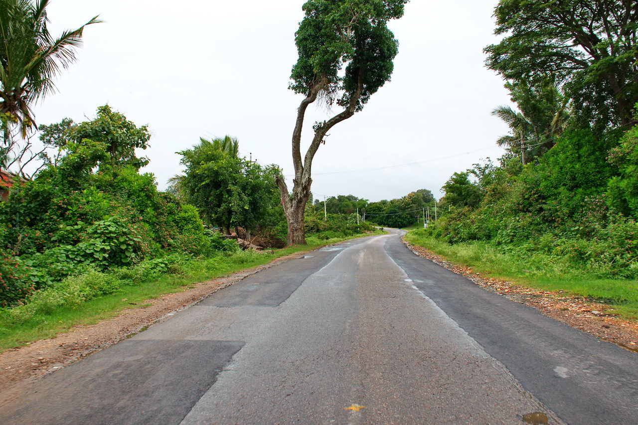 tree, road, the way forward, diminishing perspective, no people, day, transportation, green color, nature, growth, outdoors, tranquility, scenics, sky, beauty in nature