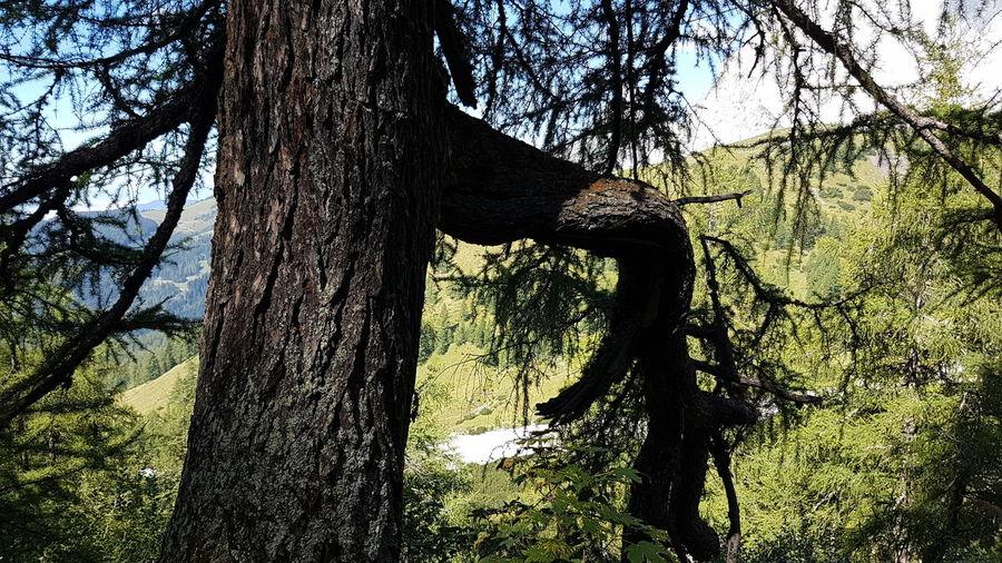 Tree Growth Outdoors Nature Sunlight
