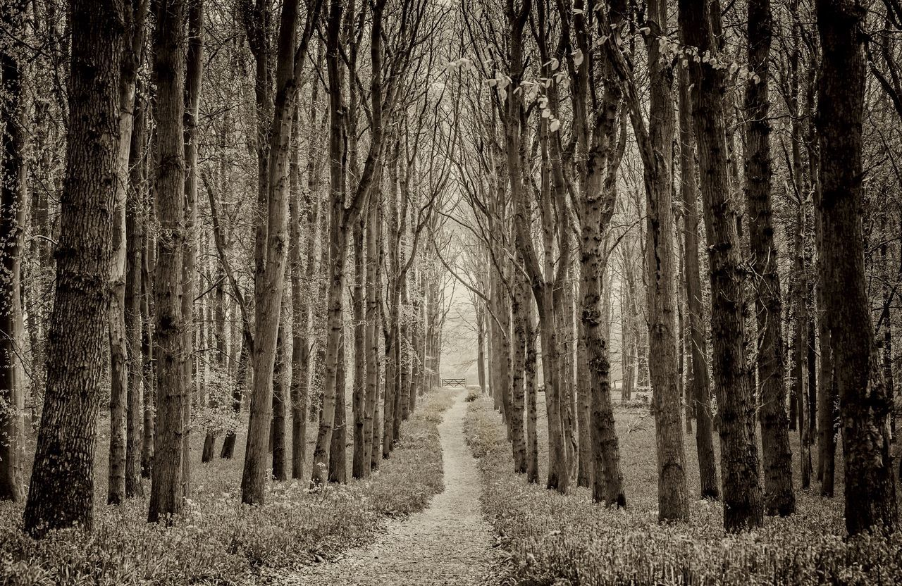 Path Through The Woods Nature Tree Forest Beauty In Nature Tranquil Scene Growth The Way Forward Tree Trunk Outdoors No People Black And White Fence Bluebell Wood Outdoor Photography Landscape