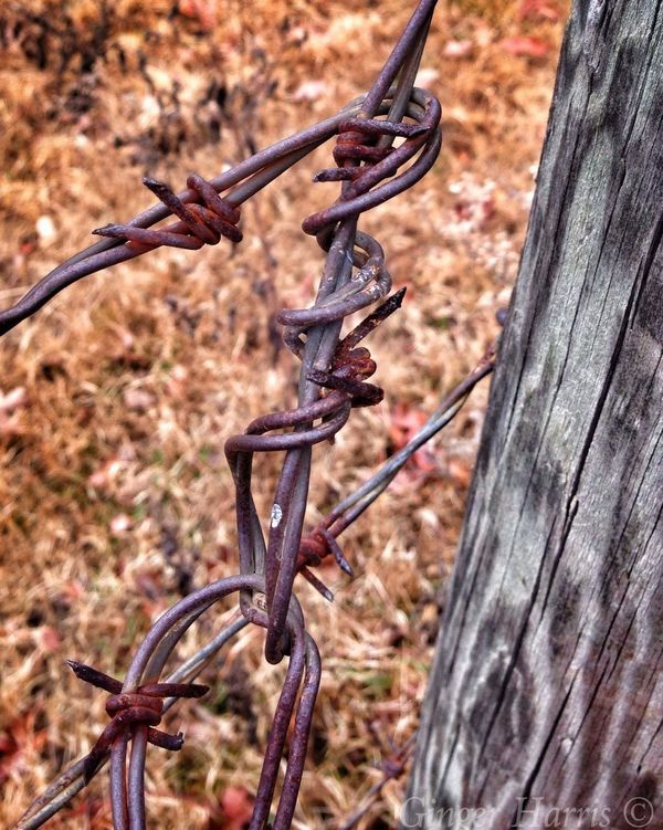 Happy Barbed Wire Wednesday For My Friends That Connect Good Morning! My Oklahoma Eye Em Nature Lover Happy Wednesday!