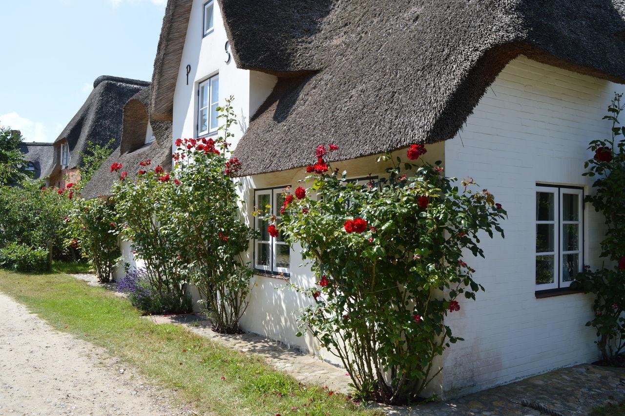 Altes Haus Bauernhaus Shilfdach Thatched Roof