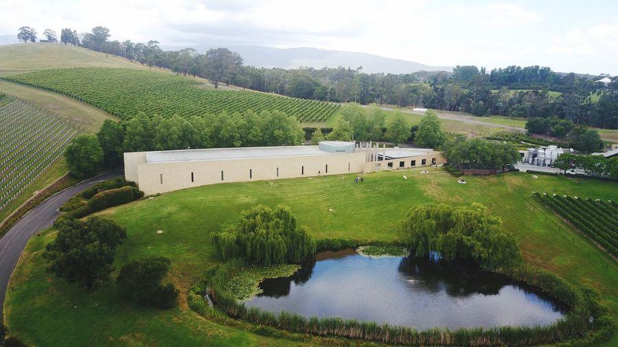 Winery Tarrawarra Winery Melbourne DJI Mavic Pro Aerialphotography Mavic Drone  Water No People Green Color