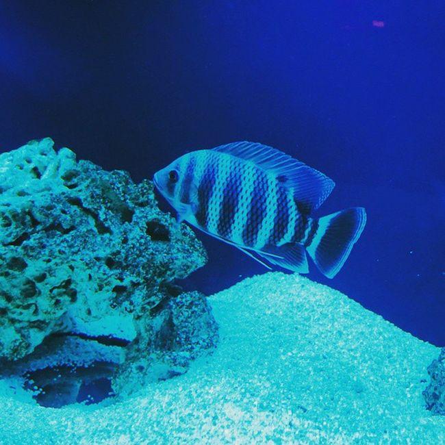 Fish Aquarium Instafish Instagood Swimming Water F4F Coral Reef Tropical TropicalFish Aquaria Saltwater Beautiful Ocean аквариум рыбки подводой красота водныймир