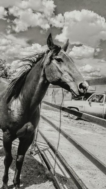 Ranch Horses Horse Domestic Animals One Animal Animal Themes No People Day Outdoors Sky Barn Lifestyle Ranch Cattle Ranch Working Animal Pony Agriculture Livestock Cowboy Country Amarillo, TX Western Equine Corral Mane Pasture Stable The Week On EyeEm
