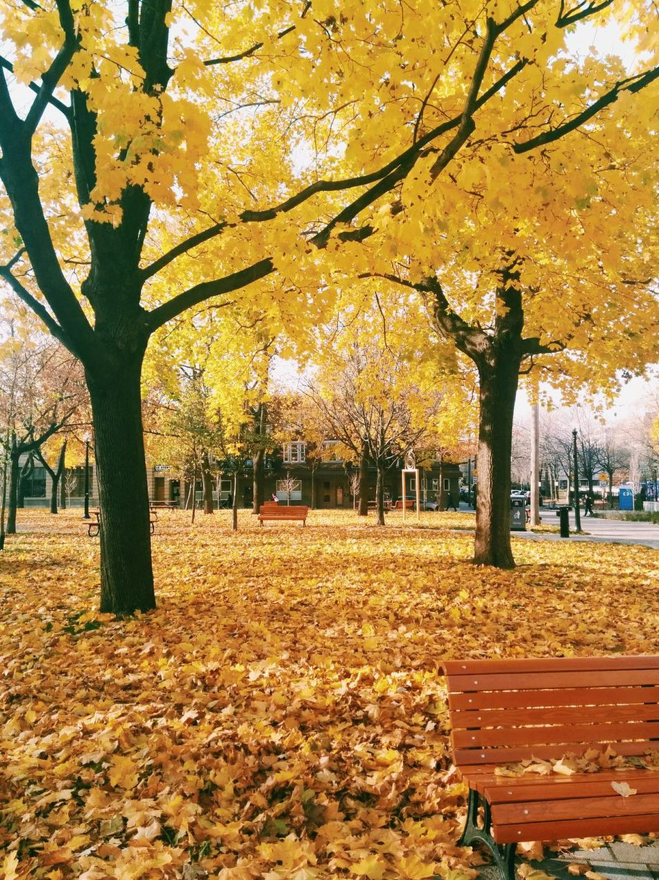 Beautiful stock photos of park, Autumn, Beauty In Nature, Bench, Canada