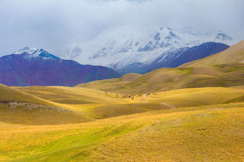 Kyrgyzstan Pamir Mountains Animals Beauty In Nature Day Domestic Animals Landscape Mountain Mountain Range Nature No People Outdoors Pamir Scenics Sky Snow Tranquil Scene Tranquility