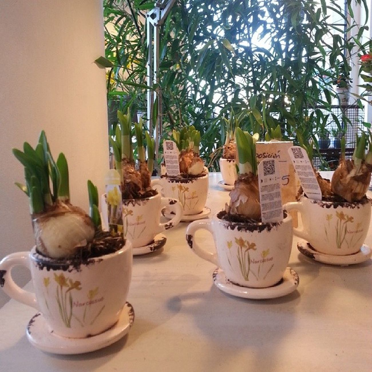Amazing Breakfast at Alea flores   concept store. Urzaiz.78 Vigo Flores Vigo Flowers Conceptstore Tendencias Lifestyle