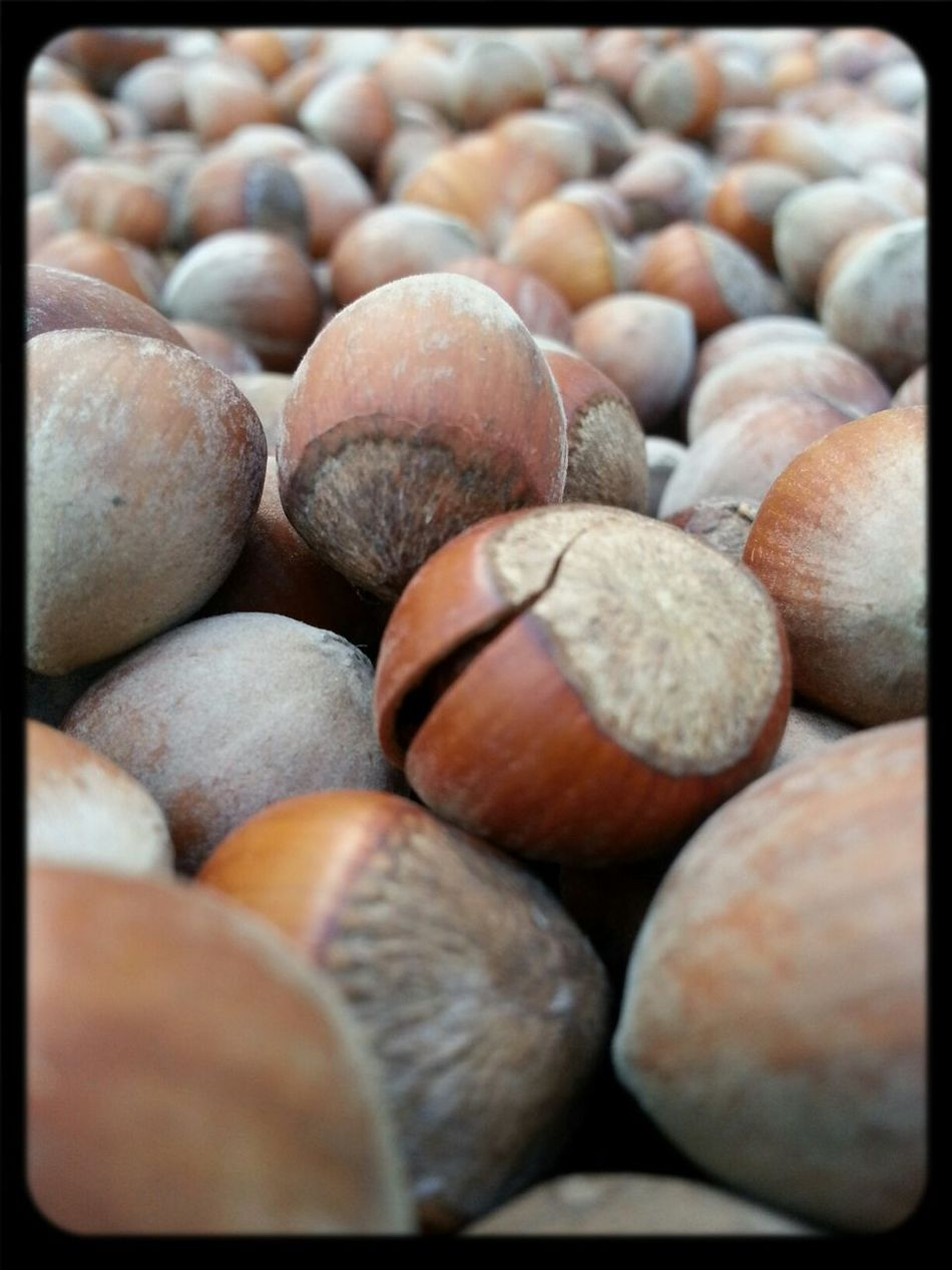 Finduk My Love ♡ Nut Ordu/Turkey