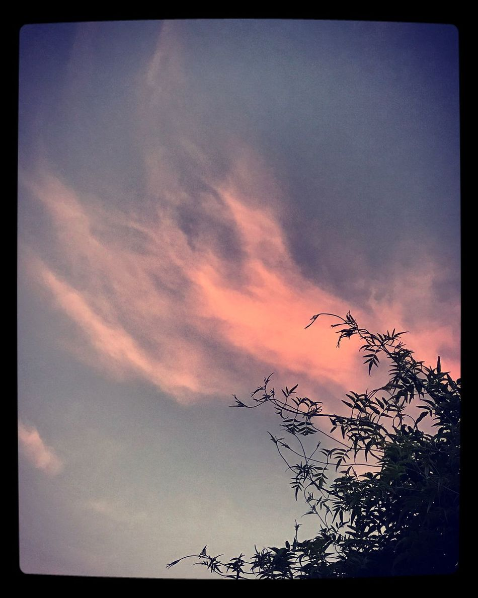 One lonely pink cloud in the sky ⛅️ Lonelycloud Pinkcloud Tranquility Cloudsky Nature Beautifulnight Eyeemphotography ⛅️