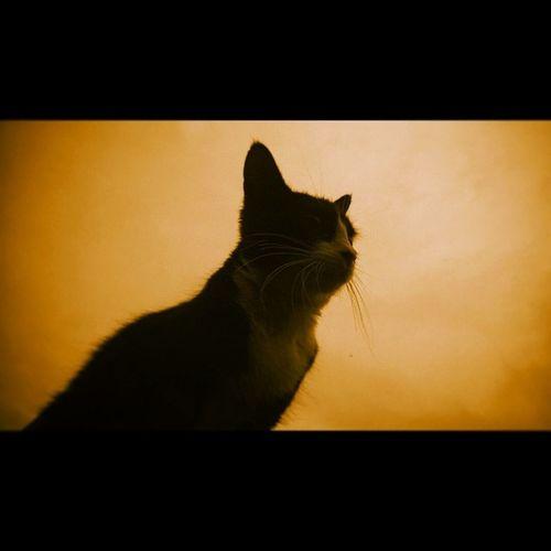 The King. Cat Parededevidro King