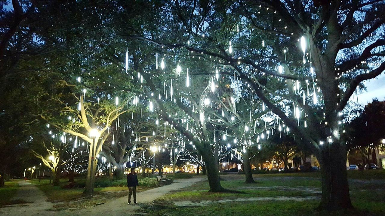 Stumbled upon some beautiful lights left on the trees at a park in St. Petersburg, FL, USA, as the Christmas season ended. Park Lights Christmas Lights Florida Sunset Magical Pretty Lights Like Ice Citylights Outdoors City Park Nightlife The Great Outdoors - 2017 EyeEm Awards