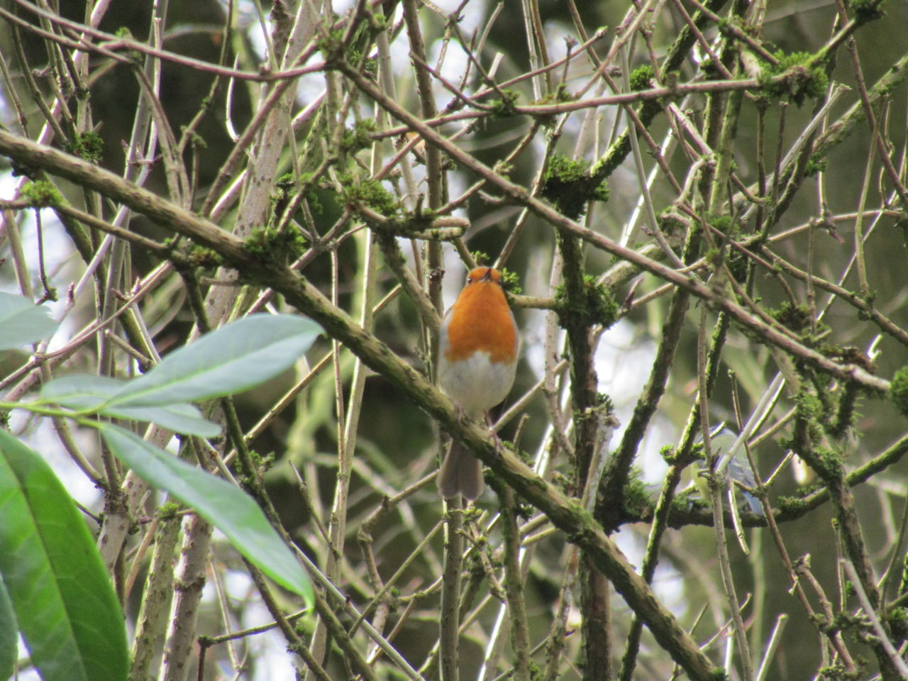Animal Themes Nature Perching Animals In The Wild Branch Tree One Animal Bird Animal Wildlife No People Beauty In Nature Day Outdoors Close-up Robin Robin Redbreast