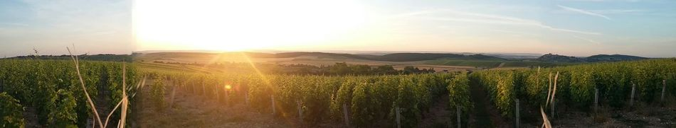 Sancerre Vin Vignes Coucher De Soleil Beautiful Nature Picture Panorama Photography Michelvattan Sunny Day