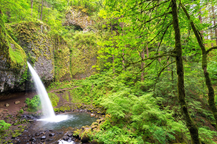 Horsetail falls and lush green forest in the Columbia River Gorge in Oregon Branch Columbia Creek Environment Forest Green Horsetail Horsetail Falls Landscape Multnomah Natural Nature Oneonta Oregon Pacific Northwest  Portland Portland, OR River Rivergorge Scenery Stone Tree United States Water Waterfall