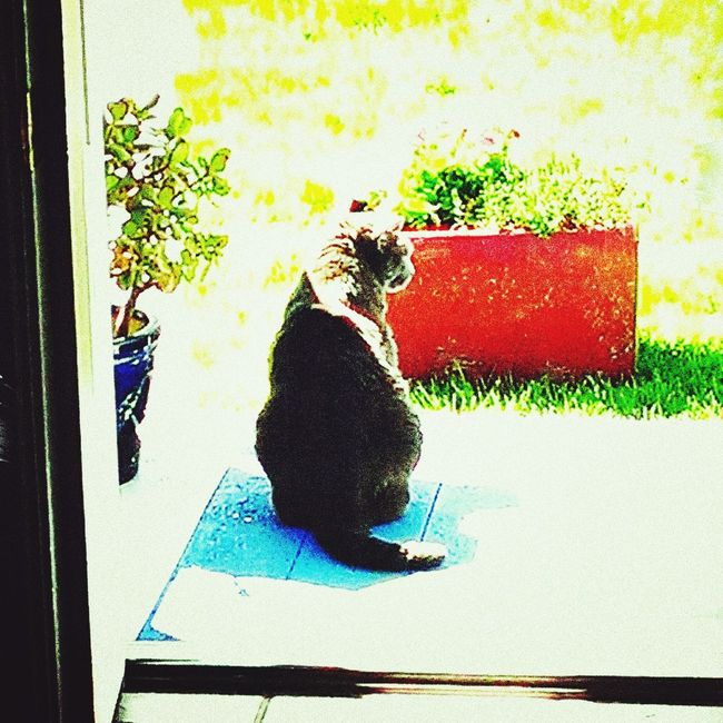 Taking Photos Petslife Check This Out Cats Of EyeEm