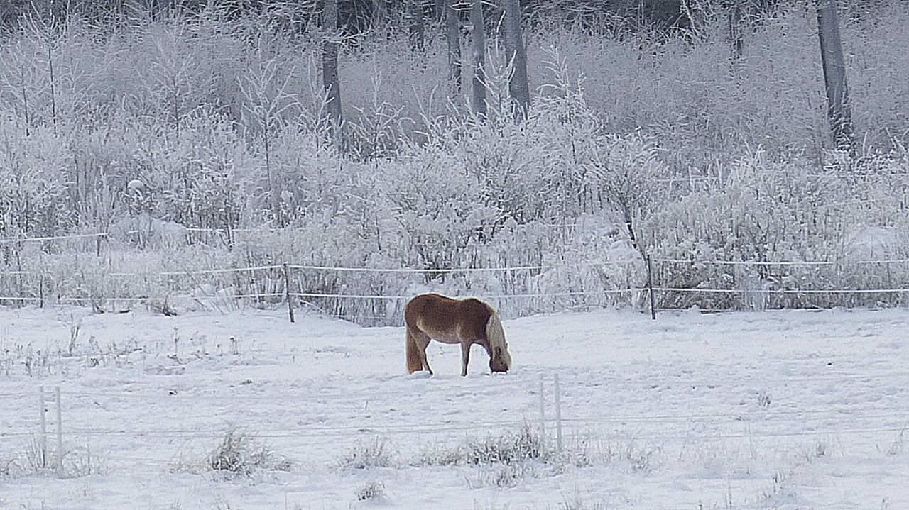 Taking Photos From My Point Of View Horse Life Horse Landscape Wonderful Nature Nature It's Cold Outside