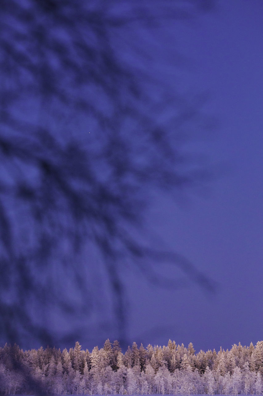 no people, nature, tree, beauty in nature, outdoors, close-up, day, sky, undersea