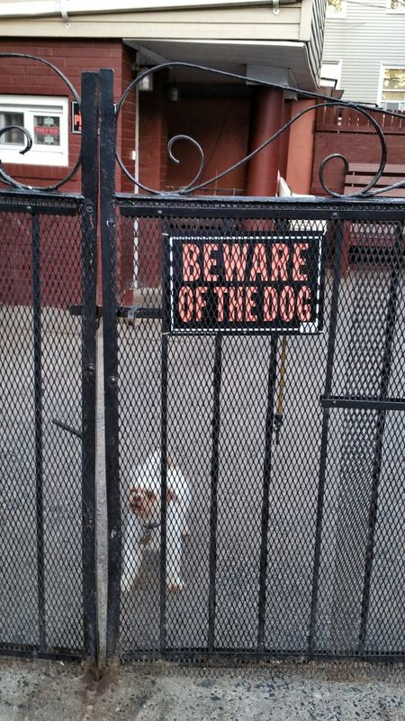 Its not the size of the dog in the fight, its the size of the fight in the dog Beware Of Dog Wishful Thinking Delusional False Advertising