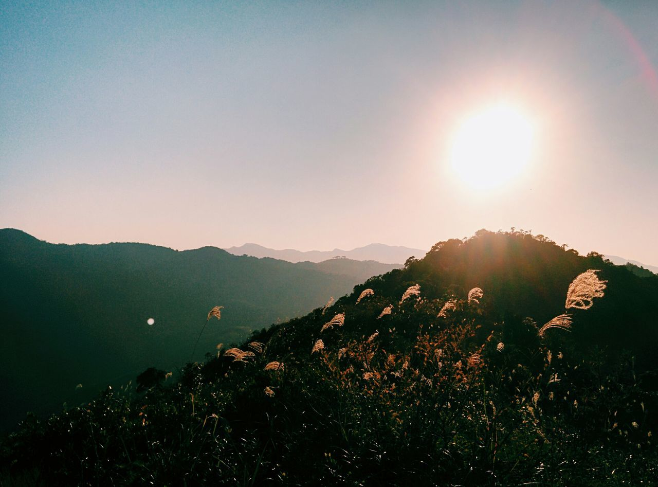 Hiking in HK: 頂 Hiking Mountains Sun Miscanthus Top Of The World Eye4photography  EyeEm Nature Lover Vscocam How's The Weather Today?